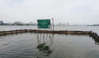 """Sau 1 năm thí điểm """"bảo bối"""" của Nhật, đàn cá Koi ở Hồ Tây giờ ra sao?"""