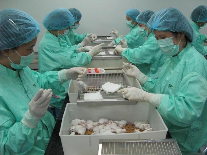 Thử nghiệm đợt 2 vắc xin Covid-19 trên chuột