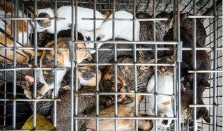FOUR PAWS và ACPA đề nghị VN cấm giết mổ và tiêu thụ thịt chó, mèo do lo ngại nguy cơ bùng phát đại dịch mới như COVID-19