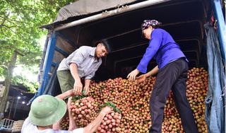 Bắc Giang có thể miễn phí cách ly cho thương nhân Trung Quốc sang mua vải thiều