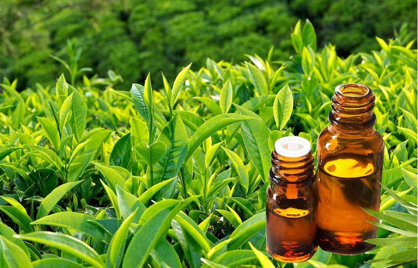 Đánh bay mụn đầu đen an toàn và hiệu quả với tinh dầu trà xanh