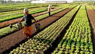 Tin tức trong ngày 25/5: Sẽ miễn 7.500 tỉ đồng tiền thuế sử dụng đất nông nghiệp mỗi năm