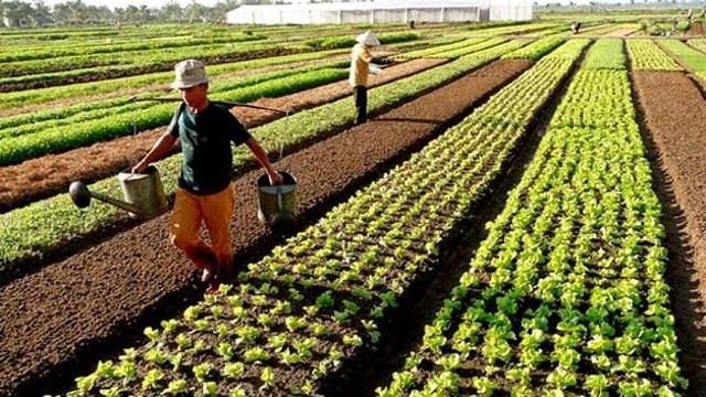 Tin tức trong ngày 25/5, sẽ miễn 7.500 tỉ đồng tiền thuế sử dụng đất nông nghiệp mỗi năm