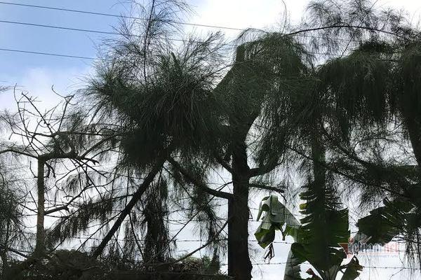 Chặt cây trong giờ học, nam sinh lớp 9 bị điện giật tử vong