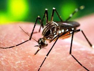 Tác hại kinh hoàng của virus Zika