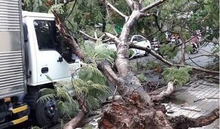 Thêm 1 cây phượng đổ tại TP.HCM làm một xe tải hư hỏng nhẹ