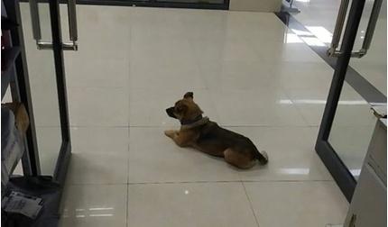 Chú chó chờ ở viện 3 tháng vì không biết người chủ mất do Covid-19