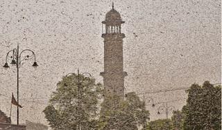 Cơn lốc xoáy châu chấu khổng lồ bay ngập trời Ấn Độ
