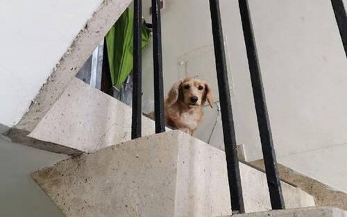 Câu chuyện xúc động về chú chó cưng vẫn nhận ra chủ sau 5 năm thất lạc