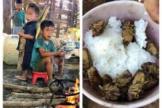 Thông tin bất ngờ về 4 đứa trẻ phải ăn cơm nguội với ve sầu khiến ai cũng xót xa