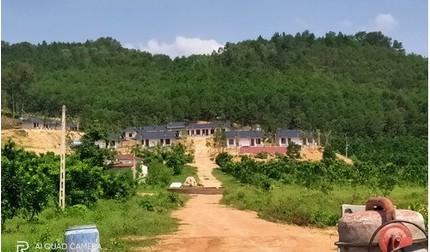 TP.Phúc Yên (Vĩnh Phúc): Hàng loạt dãy nhà kiên cố ngang nhiên 'mọc' trên đất lâm nghiệp