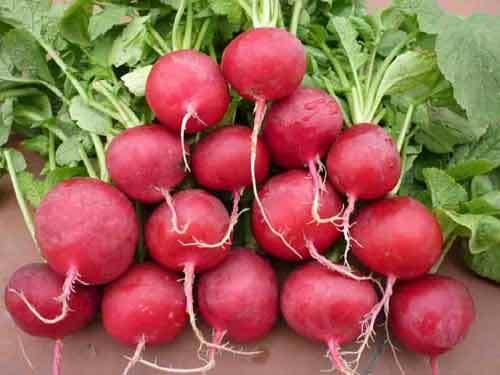 Bổ sung ngay những loại thực phẩm này vào bữa ăn, vừa bổ máu vừa tốt cho sức khỏe