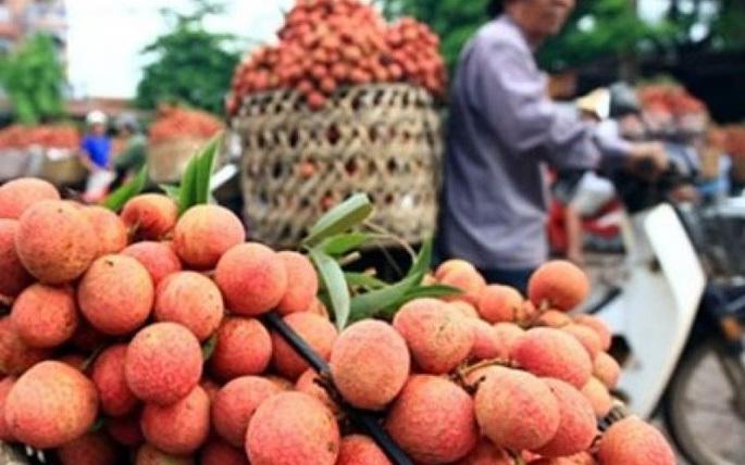 Việt Nam xuất khẩu 1 tấn vải thiều tươi đầu tiên sang Nhật Bản
