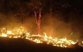 Cháy rừng ở Nghệ An, người dân 3 huyện trắng đêm dập lửa