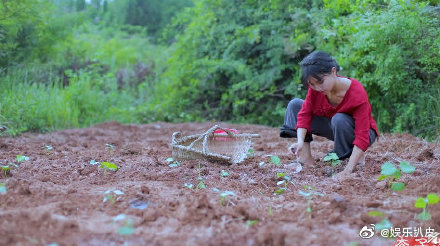 Kênh Youtube Việt Nam 'Bếp trên đỉnh đồi' bị tố đạo nhái các video của Lý Tử Thất
