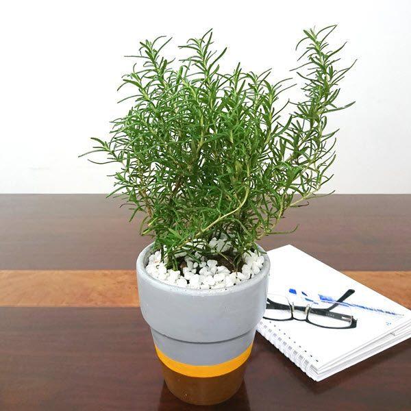 Để những loại cây này trong nhà, vừa hợp phong thủy, vừa giúp đuổi muỗi hiệu quả