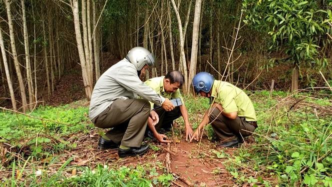 Thân phận thực sự của 2 con báo đen xuất hiện ở Đồng Nai