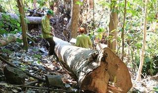 Tin tức trong ngày 9/7: Hơn 150.000 người phá rừng làm nông nghiệp ở Tây Nguyên