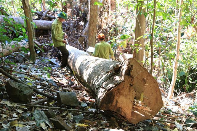 Tin tức trong ngày 9/7, hơn 150.000 người phá rừng làm nông nghiệp ở Tây Nguyên