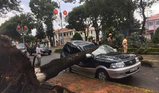 Lâm Đồng: Cây xanh bật gốc đè bẹp ô tô con đậu bên đường