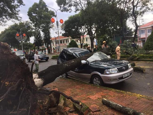 Cây xanh bật gốc đè bẹp ô tô con đậu bên đường ở Lâm Đồng