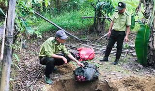 Phát hiện 4 đối tượng sát hại bò tót trong Vườn quốc gia Cát Tiên