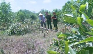 Chặt phá hơn 700 cây keo của hàng xóm vì 'mất chỗ' thả bò