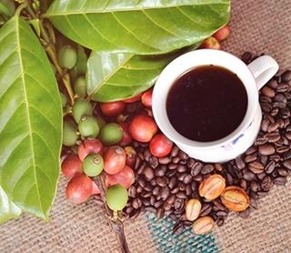 Giá cà phê hôm nay ngày 18/7: Thị trường trong nước tiếp tục tăng gần 1.000 đồng/kg