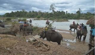 Ba mẹ con du khách bị ngã khi cưỡi voi, 1 người nguy kịch