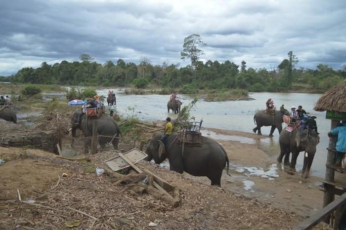 Ba mẹ con du khách cưỡi voi bị húc ngã khiến 1 người nguy kịch