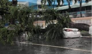 Mưa lớn khiến cây cổ thụ bật gốc đè bẹp xe ô tô dừng bên lề đường