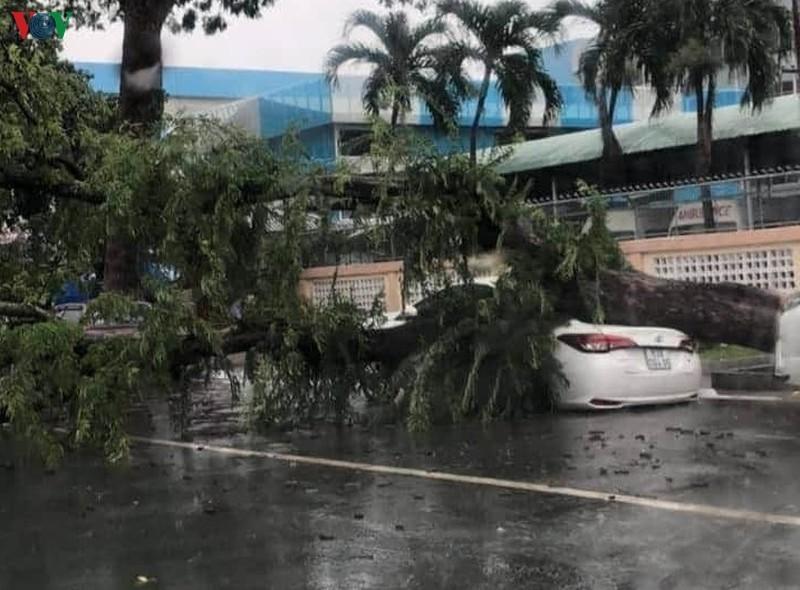 Mưa lớn, cây cổ thụ bật gốc, ngã đè xe ô tô đang dừng bên lề đường
