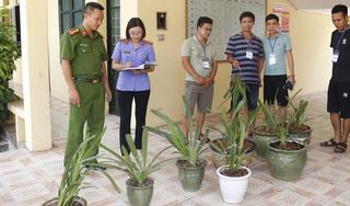 Bắt hai đối tượng ở Nam Định trộm lan quý có giá tiền tỷ