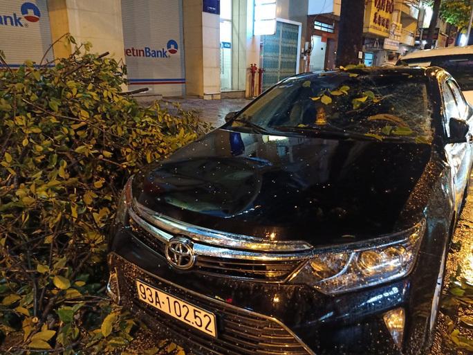 TP HCM mưa lớn, cây cổ thụ đổ đè bẹp xe ô tô và làm nhiều người khác bị thương