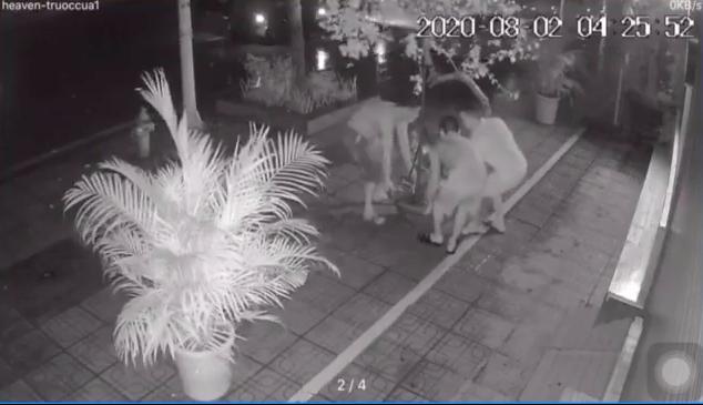 4 giờ sáng, 3 người đàn ông đi ô tô rủ nhau 'hack' chậu hoa giấy