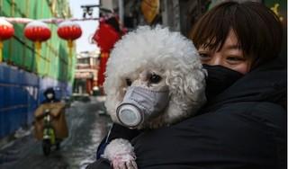 Nhật phát hiện 2 chú chó dương tính với Covid-19