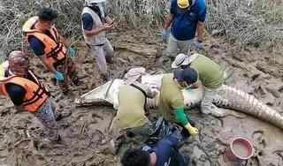 Malaysia: Tìm thấy một thi thể cậu bé ở trong bụng cá sấu