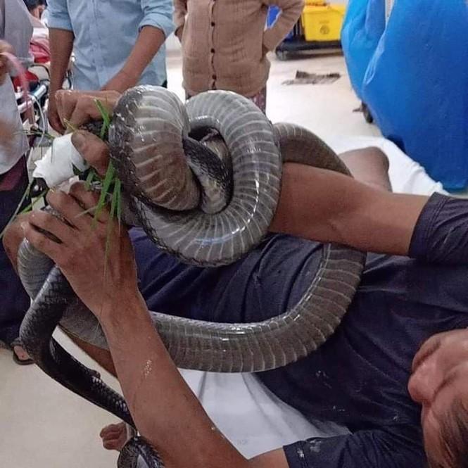 Người đàn ông bị rắn hổ mang chúa cắn trong lúc bắt đang rất nguy kịch