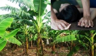 Truy tìm kẻ chặn đường, hiếp dâm bé gái 12 tuổi trong vườn chuối