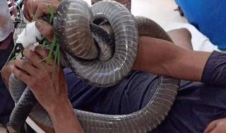 Người đàn ông bị rắn hổ mang chúa cắn được rút ống thở và giao tiếp tốt