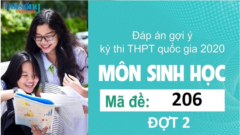 Đáp án đề thi môn Sinh học mã đề 206 kỳ thi THPT Quốc Gia 2020 đợt 2