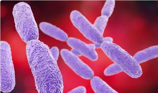 Vi khuẩn đa kháng thuốc được phát hiện trong cơ thể bệnh nhân Covid-19