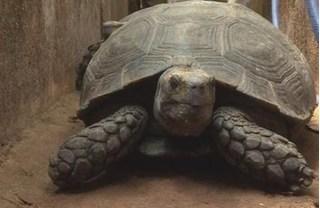 Khởi tố đối tượng nuôi nhốt trên 100 cá thể rùa quý hiếm tại Đắk Lắk