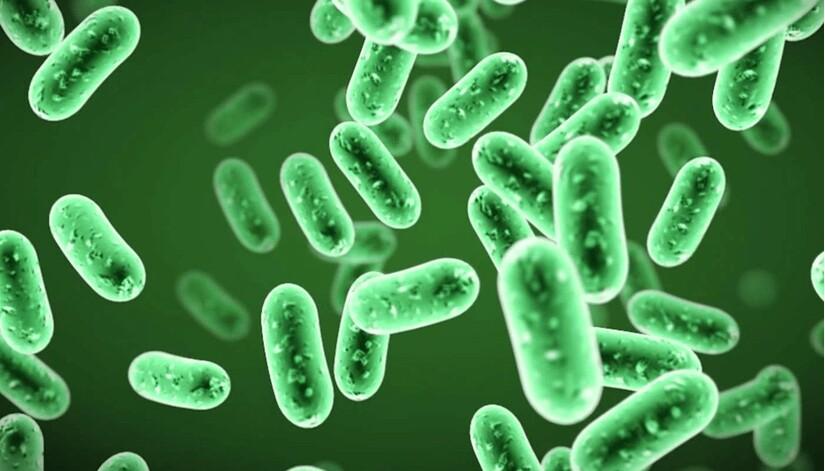 bổ sung lợi khuẩn cho người lớn