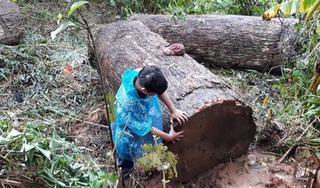 Tin tức trong ngày 15/9: Đang chở gỗ lậu, người đàn ông bị gỗ đè chết