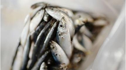 Trung Quốc phát hiện virus gây Covid-19 trên bao bì hải sản từ Indonesia