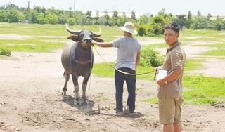 Ngang nhiên dùng xe tải đi trộm trâu, bò bán lấy tiền tiêu xài