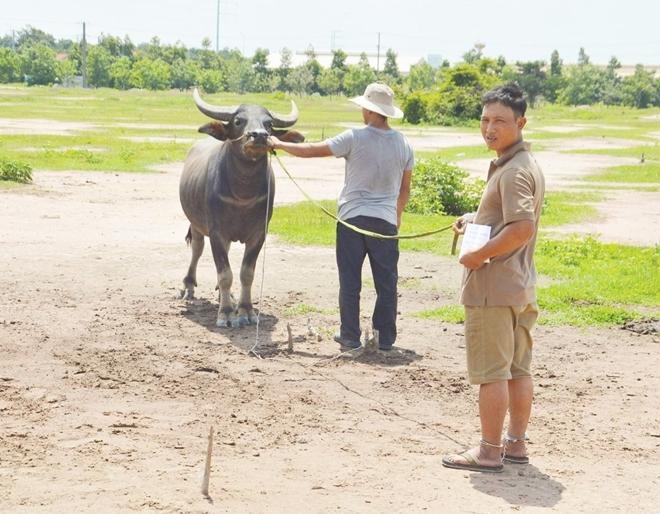 Bắt băng nhóm trộm trâu, bò hàng liên tỉnh