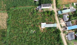 Tập đoàn TH khai mở lối đi cho nông sản và thảo dược Tây Bắc
