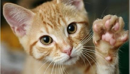 Có nên đi chích ngừa dại khi bị mèo cào hay không?